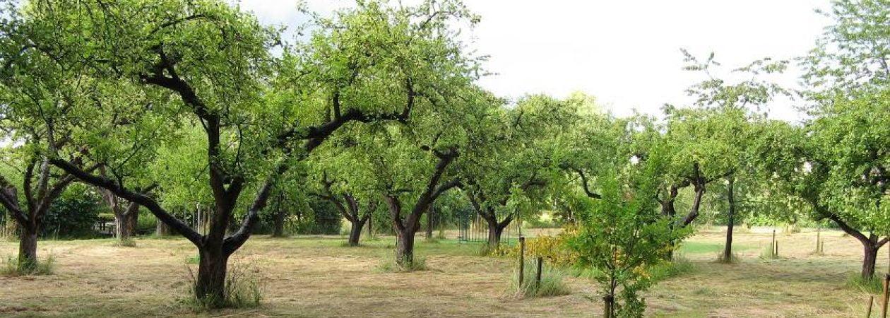 Hoogstam Fruitboomgaarden Winsum